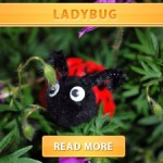 Eggcarton ladybug cover final