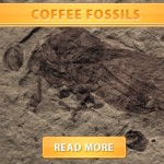 "Coffee ""Fossils"""