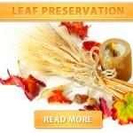 Leaf Preservation