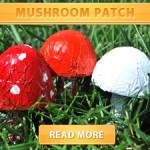 Mushroom Patch cover