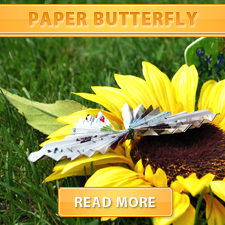 Paper Butterfly cover