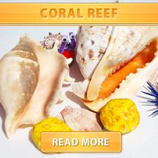 Brain Coral Reef