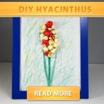 DIY Hyacinthus Cover