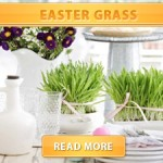 Easter Grass Cover